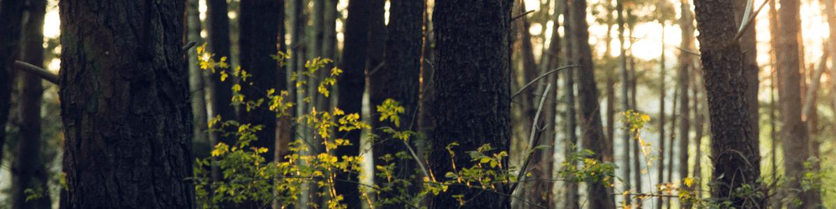 paloma lesy